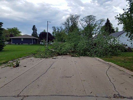 Scenes like this were common around Lake Park Tuesday morning. This tree blocked South 3rd Street south of ARCO.